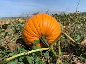 calabaza de otoño |la Clandestina