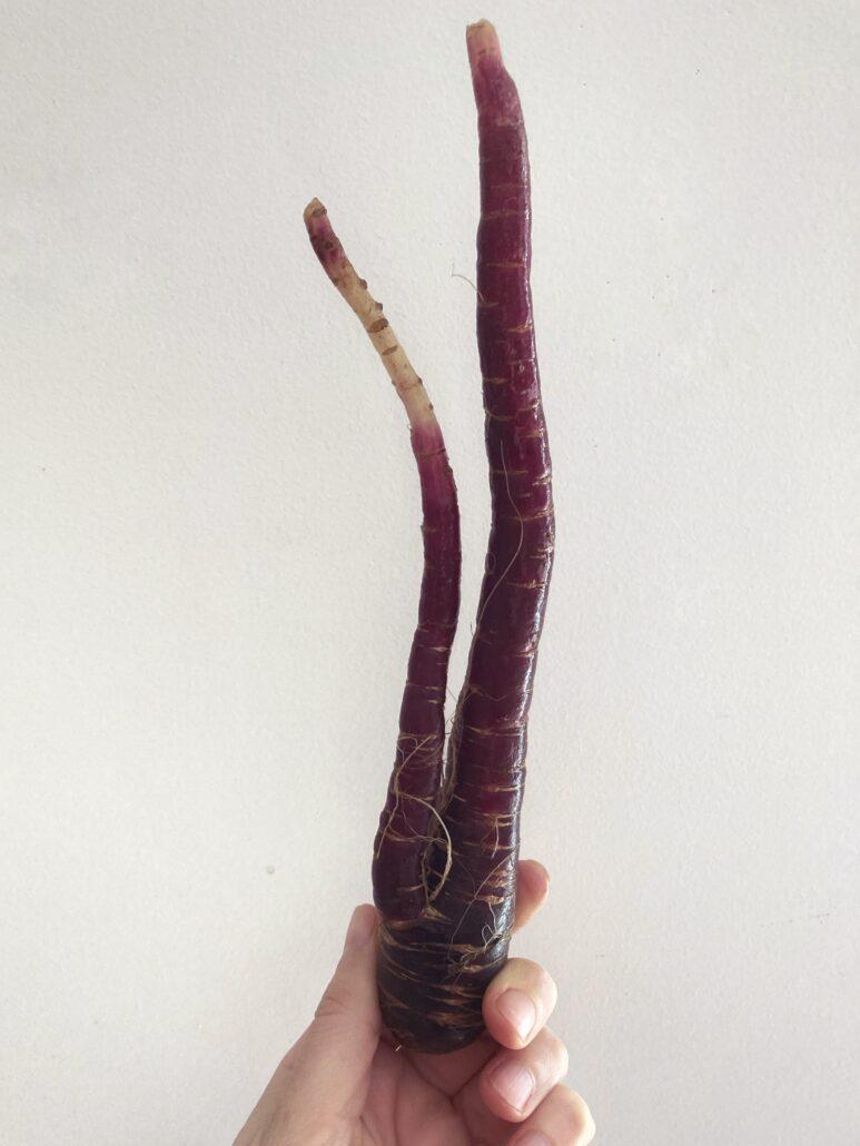 receta fácil con las zanahorias | la Clandestina
